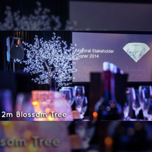 Blossom-Tree-2m-gallery1