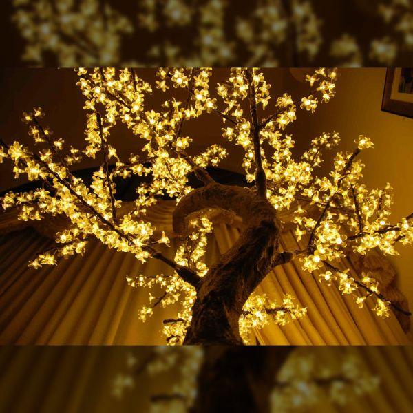 Mini-Blossom-1.6m_gallery3