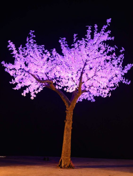 4.1m-maple-tree-violet