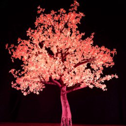 2.8m-maple-tree-red