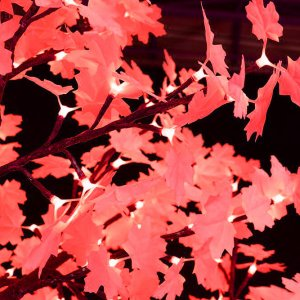 red-maple